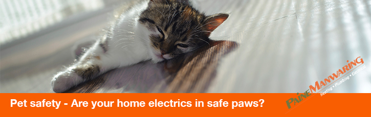 Pet Safety – Are your home electrics in safe paws?